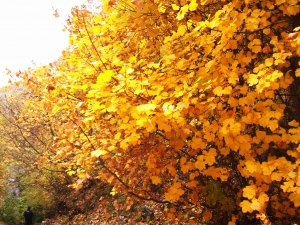 Autunno in Appennino (Slideshow)